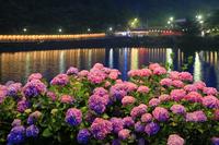 愛知県 形原温泉あじさいの里のライトアップ夜景