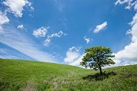 青空 一本の木