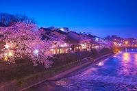 石川県 金沢市 サクラのライトアップの主計町