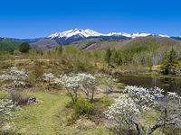 長野県 新緑の乗鞍高原と乗鞍岳