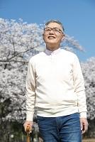 桜並木をお花見しながら散歩するシニア男性