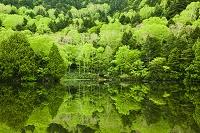 長野県 志賀高原