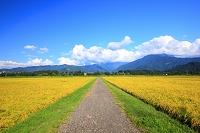 新潟県 南魚沼市 田園と越後三山