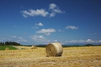 北海道 麦わらロールと丘