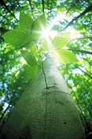 緑の若葉と太陽光