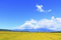 長野県 初秋の田園と浅間山
