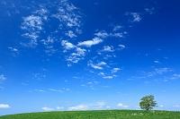 北海道 草原と一本の木