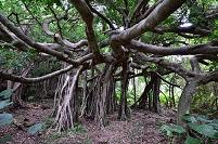 沖縄県 石垣島