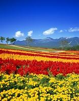 栃木県・那須町 那須フラワーワールドと那須岳