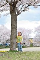 桜の樹に寄りかかり遠くを見てる日本人の男の子