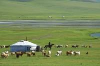 モンゴル ウブルハンガイ県 遊牧民のキャンプ