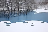 北海道 美瑛町 青い池薄氷