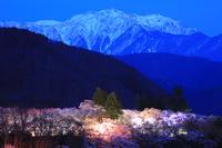 長野県 高遠城址公園 夜景
