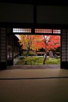 京都府 建仁寺 小書院から見る潮音庭の紅葉