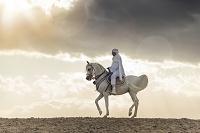 アラビアンホース