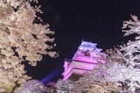 福島県 会津若松市 鶴ヶ城 ライトアップ