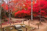 兵庫県 紅葉の瑞宝寺公園 豊臣秀吉の愛用の石の碁盤