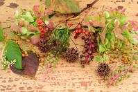 秋の草花と紅葉