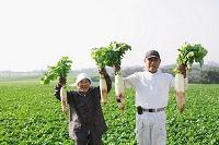 大根を収穫した農家