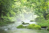 鹿児島県 悠久の森