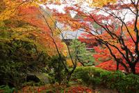 滋賀県 百済寺 本坊庭園の紅葉