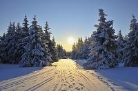 ドイツ 森林の雪景色
