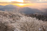 熊本県 夕暮れの阿蘇の霧氷