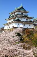 和歌山県 和歌山市 和歌山城 桜