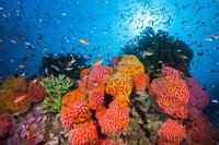 サンゴ礁と熱帯魚