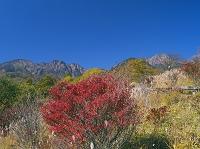 山梨県 紅葉の美し森より八ヶ岳 清里
