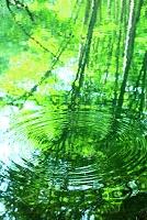 青森県 十和田市 蔦川の水面に広がる波紋