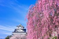 山形県 桜と上山城