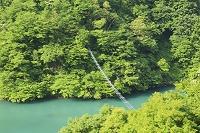 富山県 黒部峡谷 猿専用吊り橋