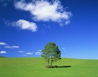 北海道・蘭越町 牧草地と2本の木