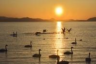 夕日と白鳥 猪苗代湖