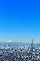 千葉県 朝の富士山と東京スカイツリー