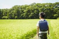 畦道を歩くランドセルを背負った男の子