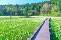 長野県 親海湿原