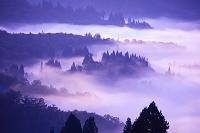 新潟県 雲海 朝景