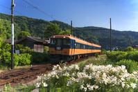 静岡県 大井川鐵道本線の電車