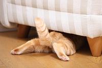 リビングソファの下に潜る猫