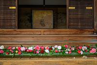 霊鑑寺 玄関の椿の飾り付け