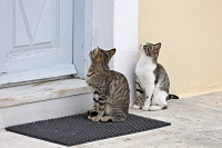 ギリシャ ドアの前に立つ猫たち