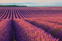 フランス ヴァレンソール高原