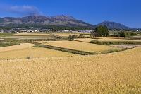 熊本県 田園と阿蘇山