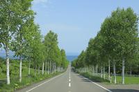 北海道 一直線の道と白樺並木