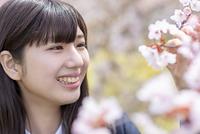 桜を見つめる女子学生