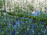 長野県 牛留池