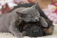 寝ている子猫と仔犬