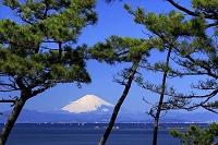 神奈川県 葉山 一色海岸からの富士山